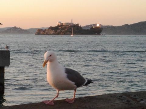 かもめとアルカトラズ島