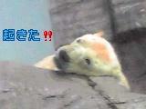 シロクマ2.jpg