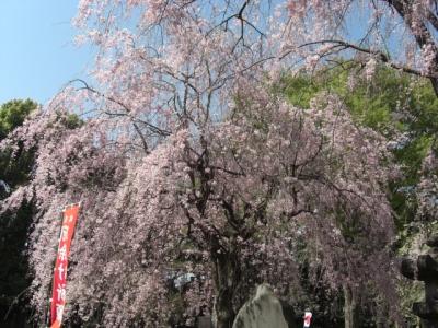 上野公園5
