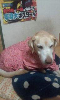ランちゃんの新しい服(ピンク)
