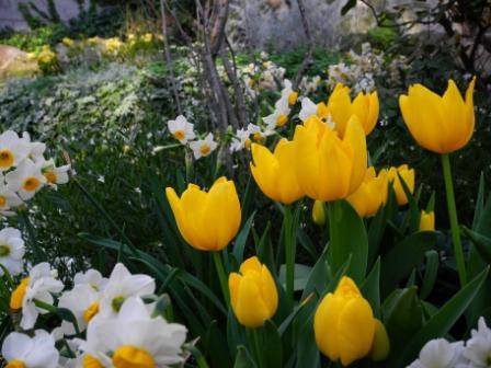 温室の花壇