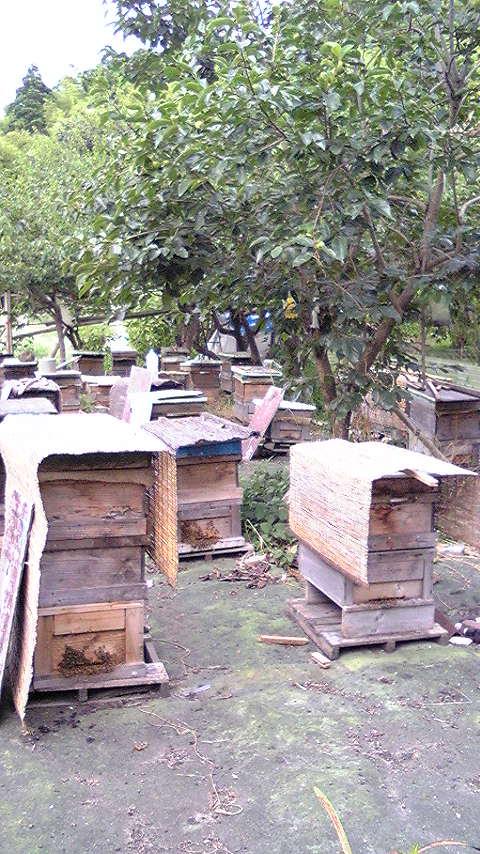 大谷さんの蜂の巣箱