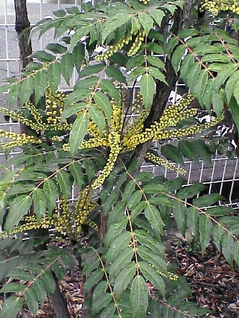 黄色い小粒の花1
