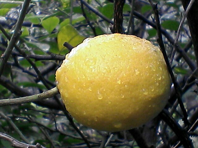レモン?2