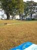 公園ヨガ会場。芝生の上。落ち葉が風に舞います♪