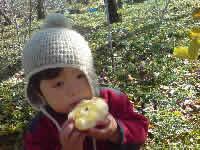 減農薬 りんご サンふじ おいしい 安曇野 長野