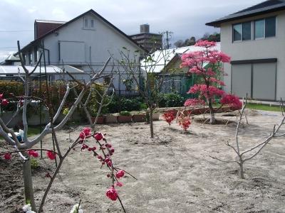 梅の花咲く風水庭園