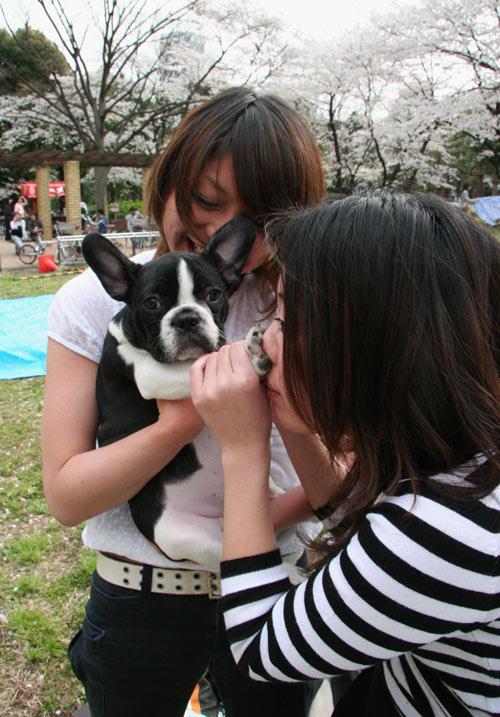 20070401花見@新宿中央公園