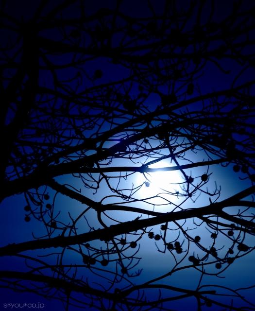 月光シルエット