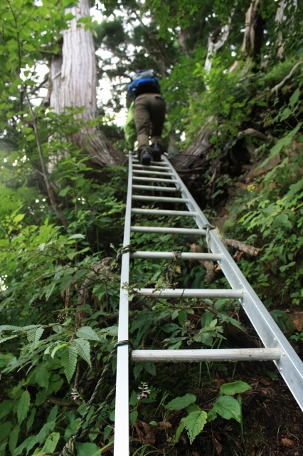 アルミの梯子