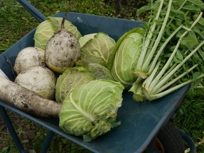 収穫できたお野菜たち。