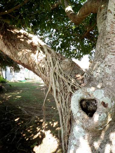 包む木1.jpg