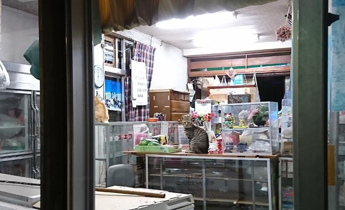 21話猫の店番.jpg
