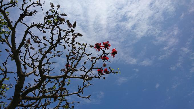 開花だ5.jpg