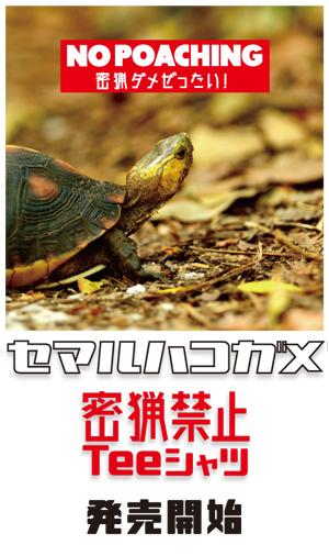 ハコガメバナー2.jpg