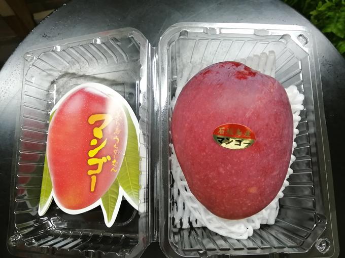 マンゴー物色しに4.jpg