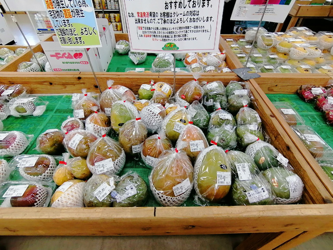 みどりマンゴー2.jpg