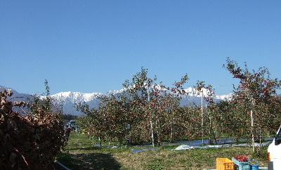 りんご園と北アルプス