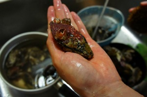 ワイルドな愛媛のムール貝