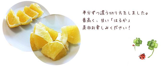 はるか柑橘