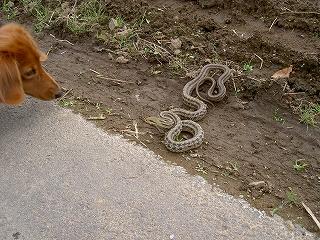 アンガスと蛇1
