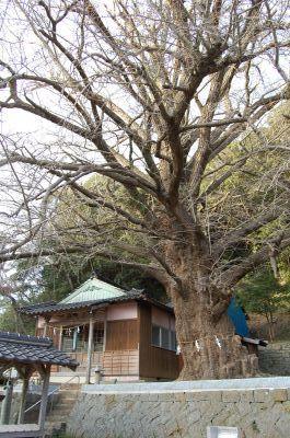 六御前神社(千尋藻)