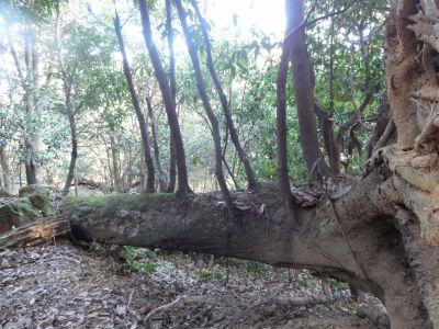 不思議な樹木