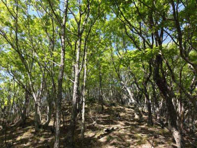 落葉樹の尾根道