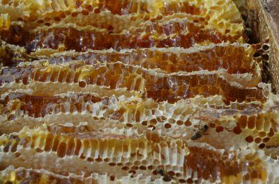 和蜂の蜂蜜