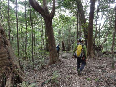 原始林を歩く