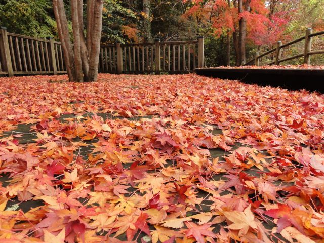 松原自然公園3
