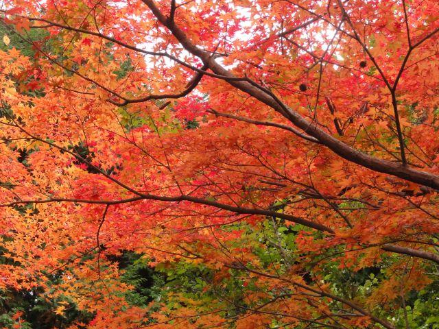 松原自然公園5