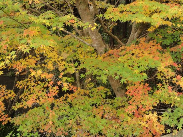 松原自然公園8