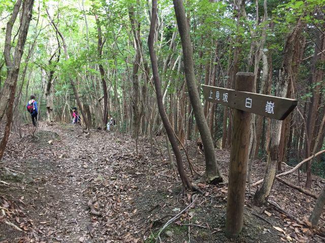 登山道リボン(白嶽〜上見坂)1