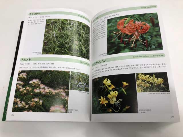対馬の植物2