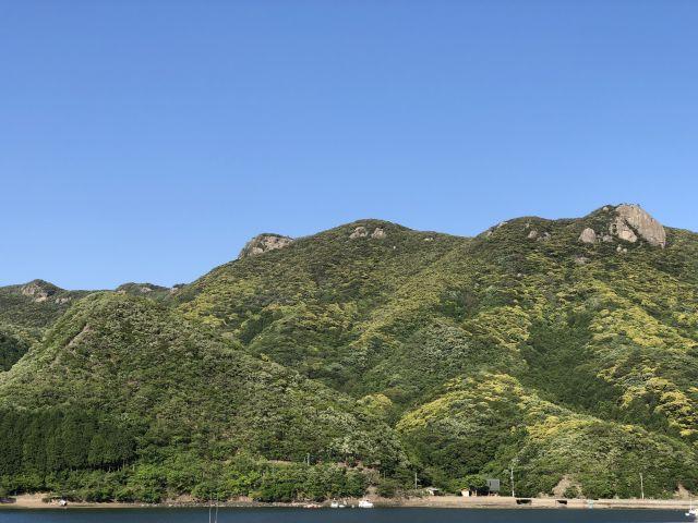 新緑の城山