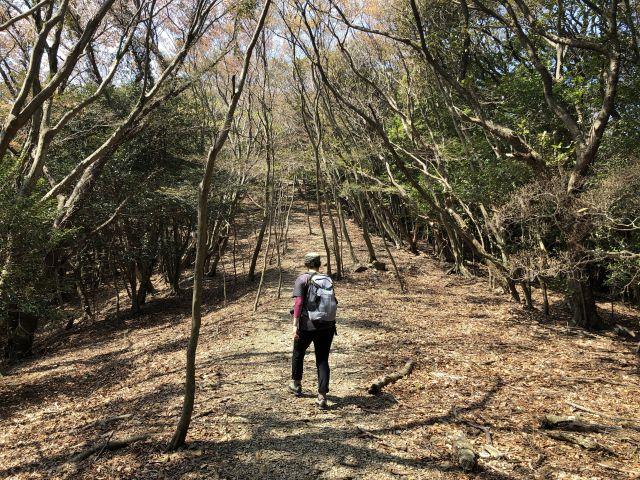 平坦な登山道