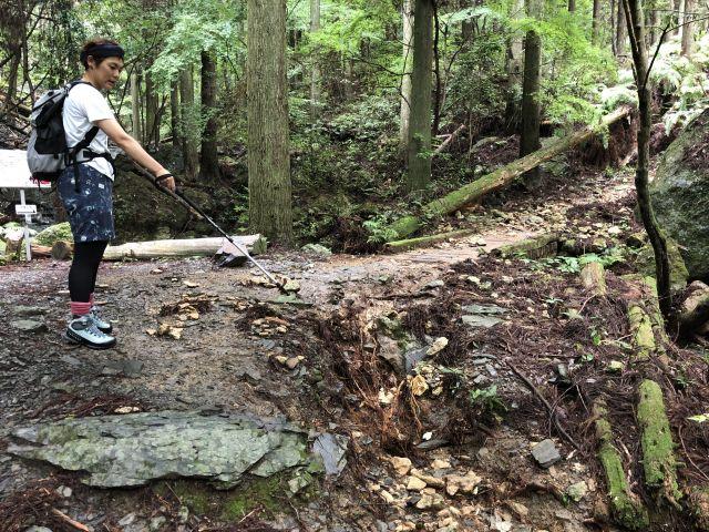 登山道の様子1