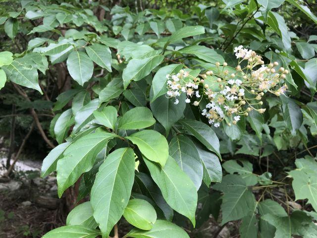 謎の植物1