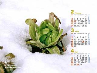 ビーワンの壁紙カレンダー「2月」