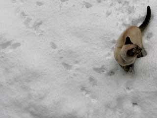 雪の中で遊ぶ銀次郎