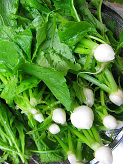 花ブログ トラコミュ>野菜、野菜づくり