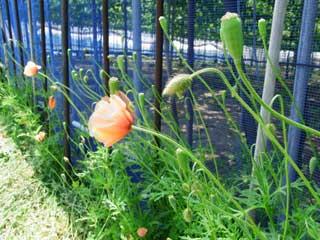 季節を彩る草花たち ブログコミュニティ - 写真ブログ村