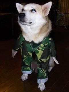 お笑い犬 ブログコミュニティ - 犬ブログ村