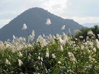 野に咲く花 ブログコミュニティ - 花ブログ村