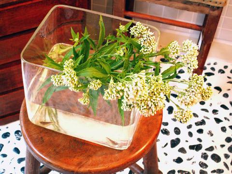 大正時代四角金魚鉢