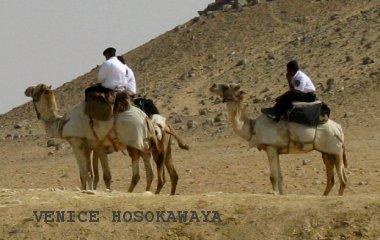 policemen on camels