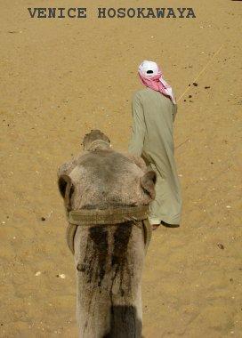 camels back