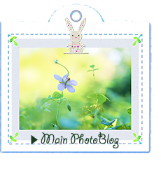ReiのMain Photo blogへ誘導LINK
