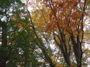 晩秋の猿江恩賜公園